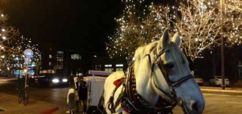 A Cold Night, A Warm Blanket, and the Clip Clop of a Horse's Hooves…Colorado Carriage and Wagon celebrating 15 years in business